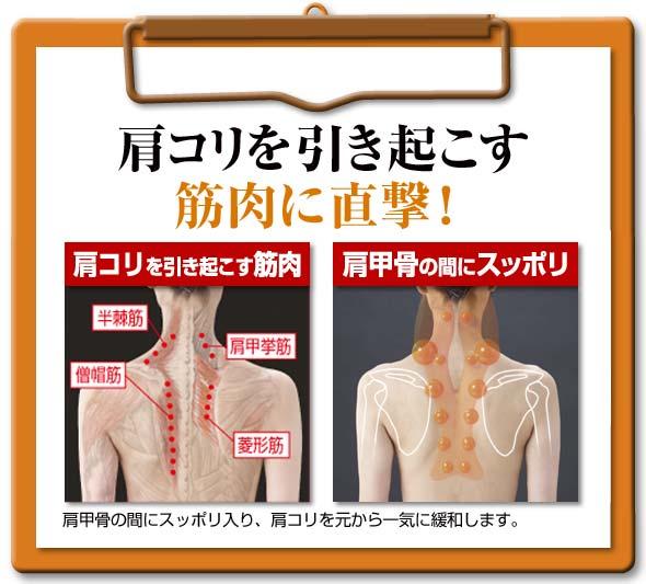 肩こりを引き起こす 筋肉 直撃