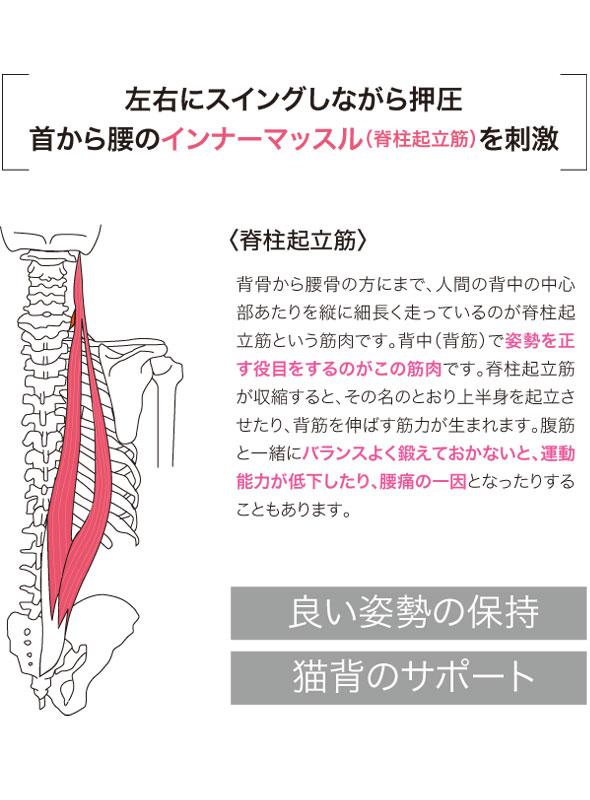 首から腰のインナーマッスル(脊柱起立筋)を刺激