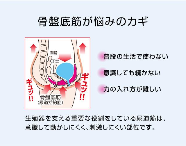 骨盤底筋が悩みのカギ。骨盤底筋は刺激しにくい。
